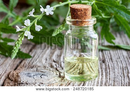 A bottle of common vervain essential oil with fresh blooming verbena officinalis plant stock photo