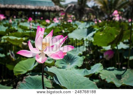 This beautiful waterlily or lotus flower is complimented by the rich colors. stock photo