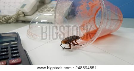 Cockroach on the office table eating a juice. The ugly cockroach feels mustache bread. Cockroaches in the office stock photo