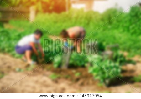 workers work on the field, harvesting, manual labor, farming, agriculture, agro-industry in third world countries, labor migrants, blurred background stock photo