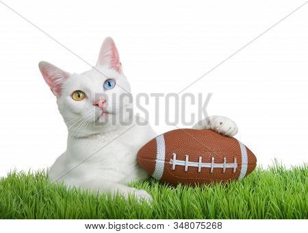 Close up portrait of a white kitten with heterochromia laying on green grass holding a small football with one paw looking at viewer, isolated on white background. Fun animal antics superbowl themed stock photo