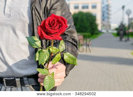 a beautiful red rose flower on the background of the chest and torso in the hand of a man on the background of a city alley stock photo
