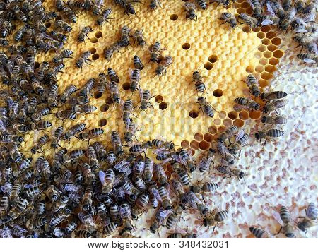 Abstract hexagon structure is honeycomb from bee hive filled with golden honey. Honeycomb summer composition consisting of gooey honey from bee village. Honey rural of bees honeycombs to countryside. stock photo