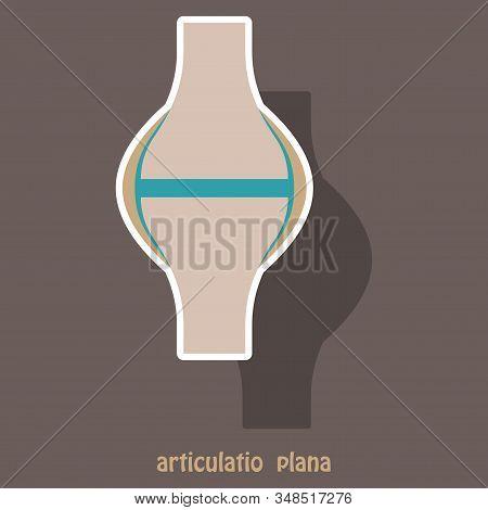 Knee joint health care icon sticker anatomy human internal biology stock photo