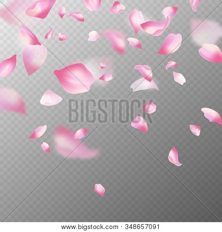Pink sakura petals. Realistic pink falling cherry petals, spring blossom tree. Romantic floral decoration japanese elements vector blossoming flower abstract background stock photo