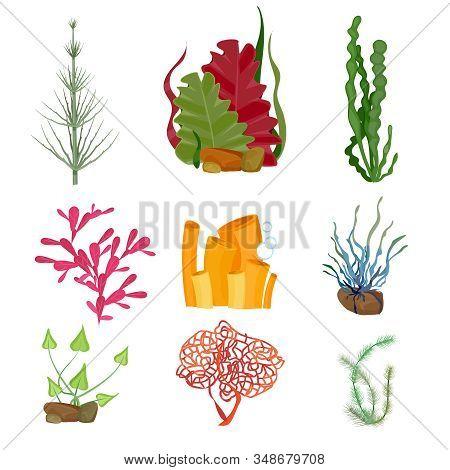 Seaweed. Underwater ocean or sea plants marine botanical wildlife cartoon set. Botanical underwater aquarium plant, wildlife seaweed illustration stock photo