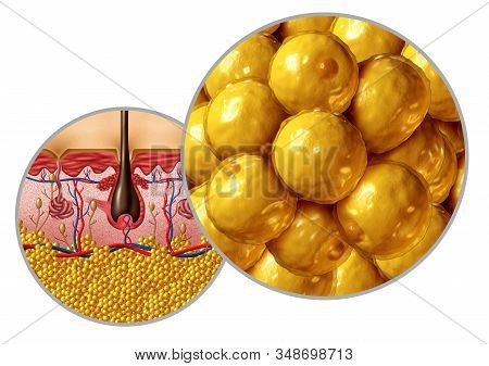 Fat anatomy diagram adipocyte or lipocyte concept with a cross section of the human body surface organ as a health care and medical symbol of anatomical function with 3D illustration elements. stock photo