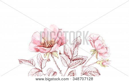 Watercolor Rose bouquet border. Botanic hand drawn banner with place for text. Big flowers with ink leaves isolated on white for cosmetics, wedding, greeting cards stock photo