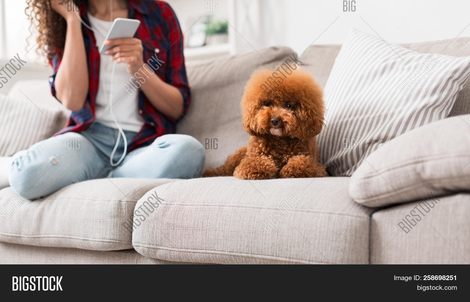 adorable,alone,animal,background,beautiful,brown,busy,cheerful,comfortable,concept,copy,couch,cozy,cute,dog,domestic,female,fluffy,friend,funny,girl,happy,home,indoor,life,little,looking,love,lovely,music,one,owner,pet,poodle,portrait,puppy,rest,sitting,small,smartphone,sofa,space,studio,tiny,toy,toy-poodle,white,woman,young