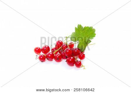 Close up view of red currant berry isolated on white background. A bunch of red currant with small green leaf of red currant bush. stock photo
