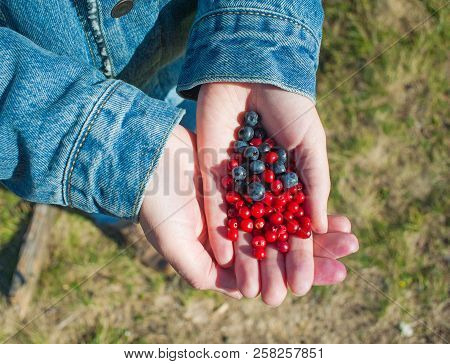 Eco conscious concept with person holding berries in hands, Enviromental friendly background with fall berry harvest stock photo