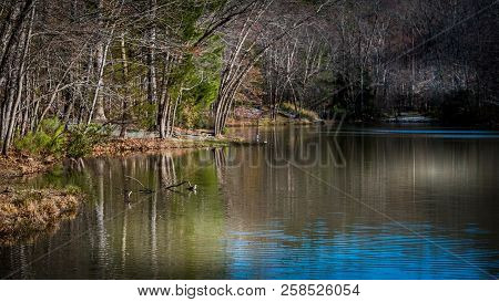 Small lake with bare trees and reflection in the water in late autumn stock photo