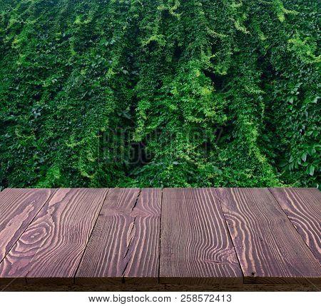 Lush green wall of hedera helix or creeper ivy carpet foliage pattern stock photo