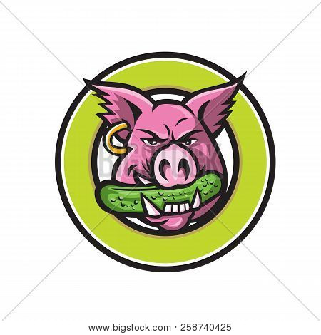 Mascot icon illustration of head of a wild pig, boar or hog biting a pickle or gherkin, a pickled cucumber viewed from front set in circle on isolated background in retro style. stock photo