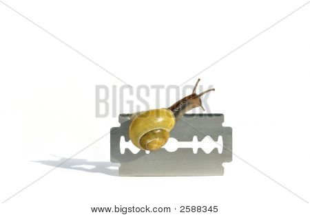 Snail creeping over a razor blade isolated on white stock photo