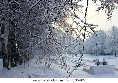 Trees with snow caps. Winter patterns. Frozen air. Blue sky under the trees. Branches with snow. hoarfrost on the trees. Railway station. Sun on the background stock photo