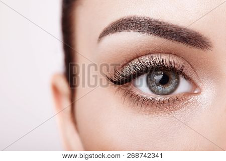Female Eye With Extreme Long False Eyelashes. Eyelash Extensions. Makeup, Cosmetics, Beauty. Close U
