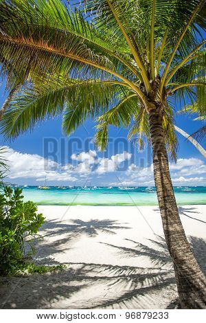 Tropical Beach With Coconut Palm Tree, White Sand And Turquoise Sea Water-Dishwasher Magnet Skin (size 24x24)