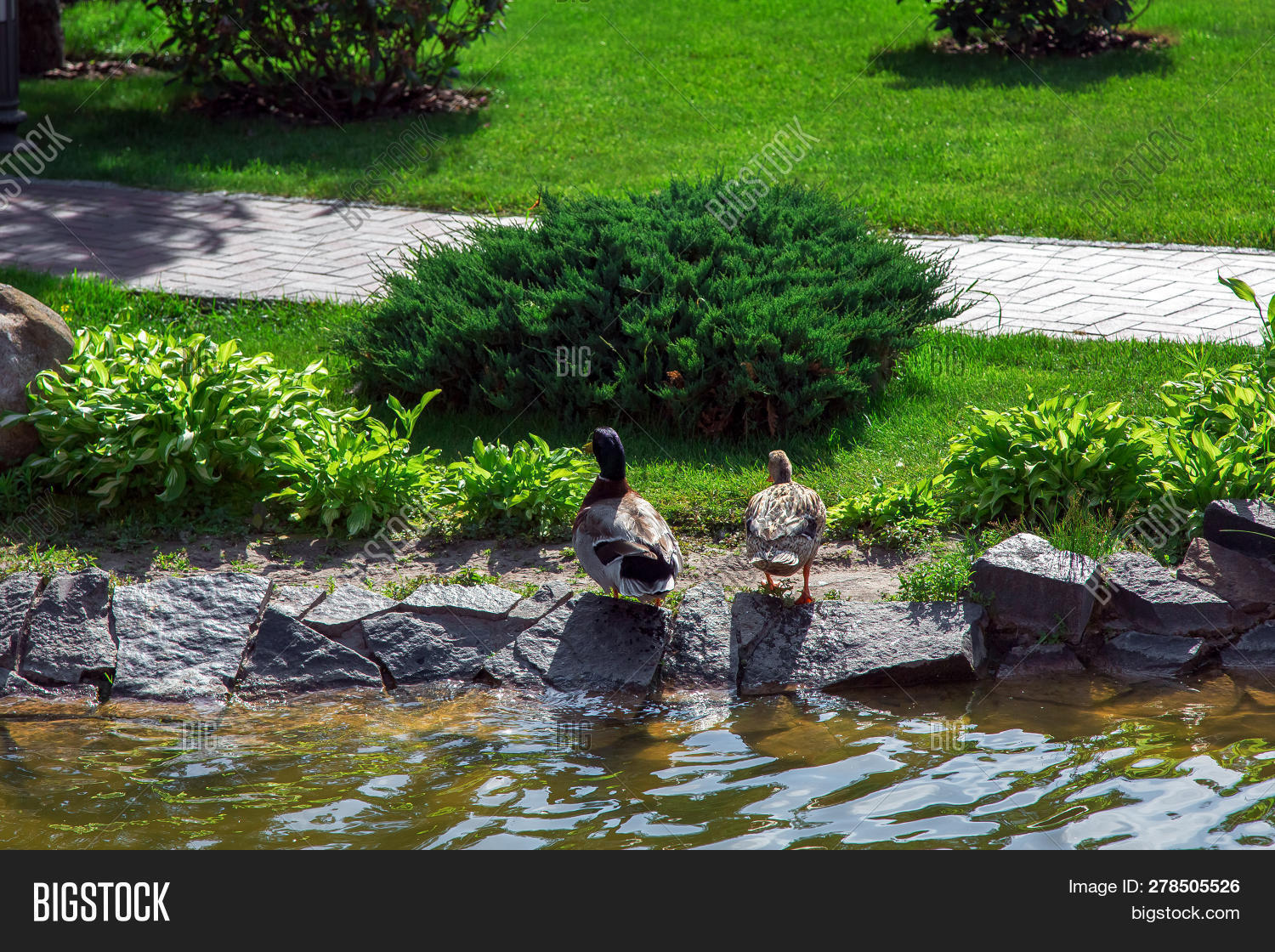 Ducks Sit On A Decorative Stone On Land With Landscape