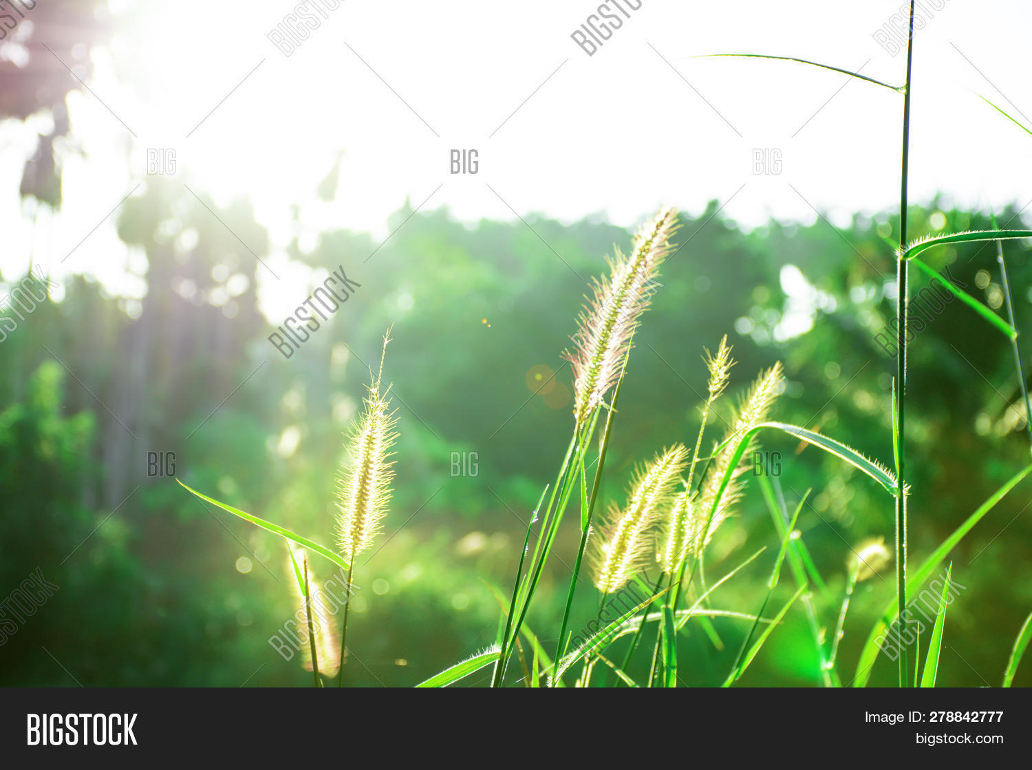 abstract,agriculture,autumn,background,beautiful,beauty,bright,close,closeup,colorful,dew,field,flare,flower,forest,fresh,frost,garden,grass,green,growth,land,landscape,lawn,leaf,leaves,light,meadow,morning,natural,nature,outdoor,plant,raindrop,rays,scenery,season,sky,soft,spring,summer,sun,sunlight,sunny,sunrise,sunset,sunshine,texture,vibrant,yellow