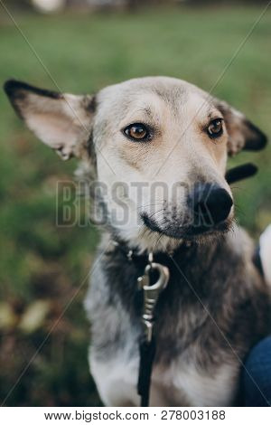 Airstock is - Portrait Of Cute Gray Dog With Sad Eyes And