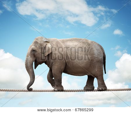 Elephant balancing on a tightrope concept for risk, conquering adversity and achievement stock photo