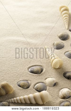 sea shell frame with clamms and spiral shells on the beach sand. Seahell background as concept for s-Lg Fridge Magnet Skin (size 36x65)
