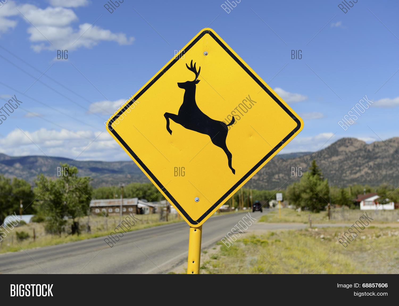 accident,antlers,blue,car,caribou,caution,colorado,crossing,cycling,dakota,danger,deer,deer hunting,driving,elk,fatality,hunting,insurance,interstate,iowa,mammals,montana,moose,new,pennsylvania,repair,road,roadkill,roadsign,rv,safety,sign,sky,south,usa,virginia,warning,west,western,wyoming,york