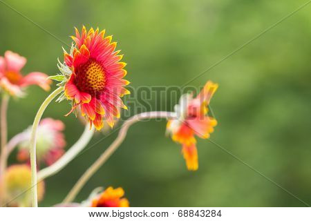 Collection of pictures for theme  Decorative flowers