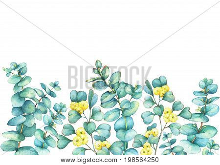Border with a branch of silver-dollar eucalyptus (Eucalyptus cordata) and Eucalyptus websteriana (Heart-leafed), isolated on white background. Watercolor hand drawn painting illustration. stock photo