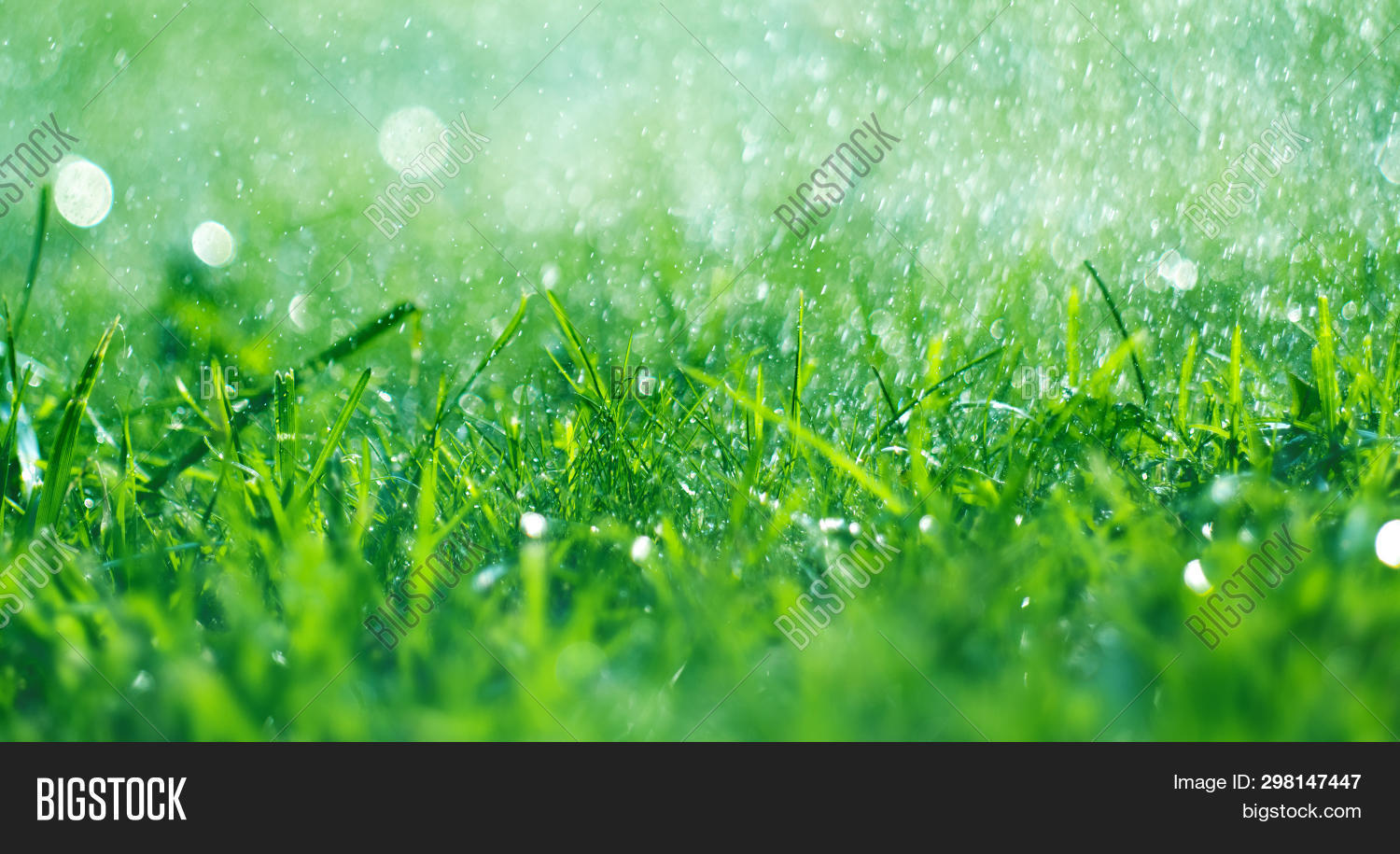 Grass with rain drops. Watering lawn. Rain. Blurred Grass Background With Water Drops closeup. Natur