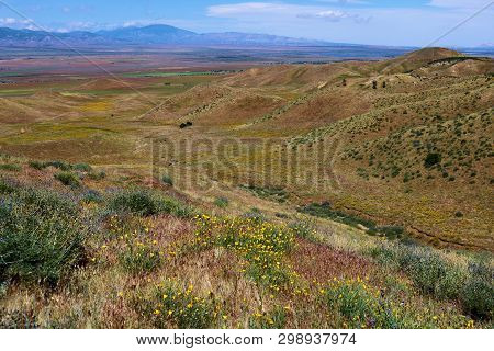 Chaparral plants and spring wildflowers on arid badlands overlooking the Antelope Valley taken in the rural San Gabriel Mountains, CA stock photo