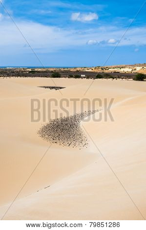 Sand dunes in Viana desert - Deserto de Viana in Boavista - Cape Verde - Cabo Verde