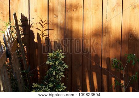 The morning sun is casting shadows of a picket fence onto a stockade fence with umbrella and plumeria plans showing with copy space in the upper right. stock photo