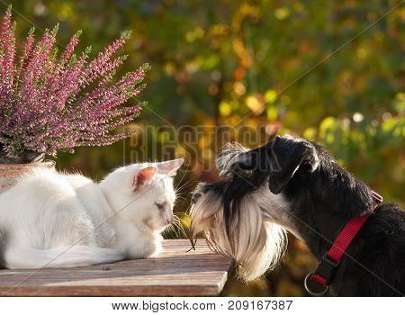 Dog Smelling Little White Cat