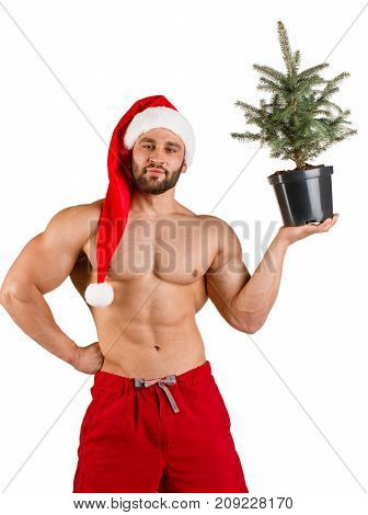 Fitness man dressed as Santa Claus with Christmas tree in his hand at studio photo session, alone, white background stock photo