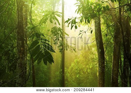 Tropical rain forest with morning sunlight shine through the dense, Malaysia stock photo