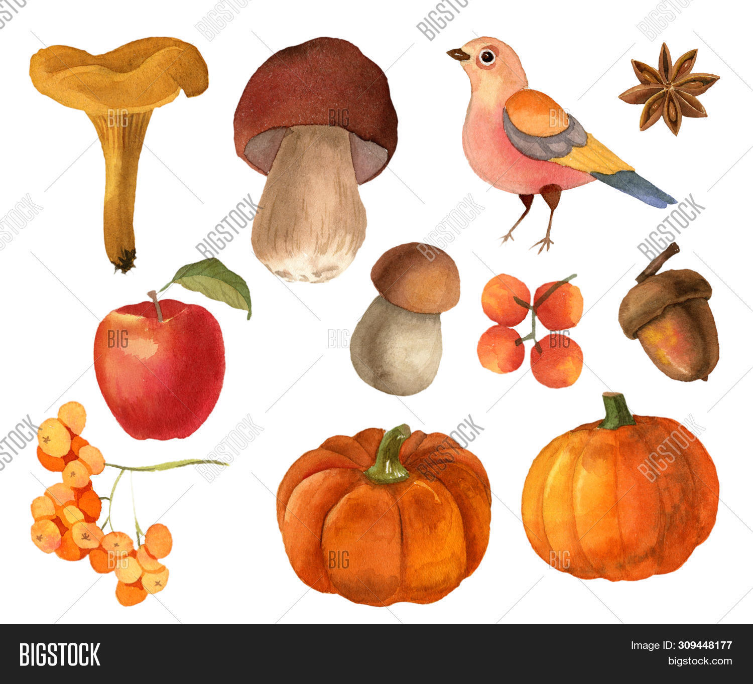 acorn.,artwork,autumn,banner,berries,bird,botanical,bouquet,bud,card,clipart,colorful,composition,decor,decoration,decorative,design,drawing,elements,fall,festival,festive,garden,halloween,harvest,illustration,isolated,leaf,leaves,mushrooms,orange,paint,plants,pumpkin,season,seasonal,set,thanksgiving,watercolor,yellow
