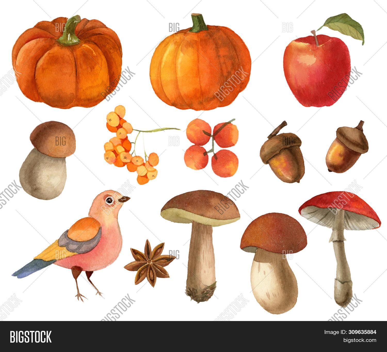 Watercolor autumn (fall) clipart (set) - with bird, berries, leaves, pumpkins, mushrooms, acorn.