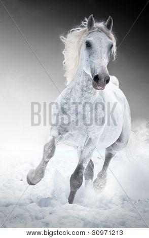 Cheval blanc court galop en hiver