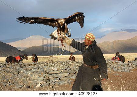 Mongolie - 25 juillet : le cavalier mongol senior en costume traditionnel avec l'aigle royal au cours