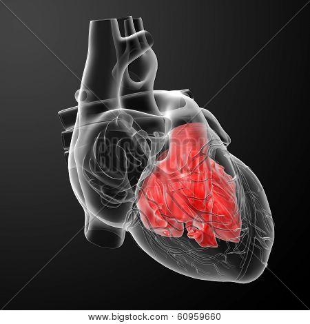 3d render illustration Heart atrium - front view stock photo
