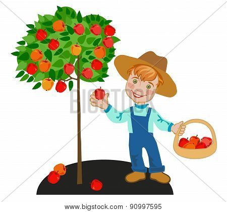 Happy lil child gardener collects red apples stock photo
