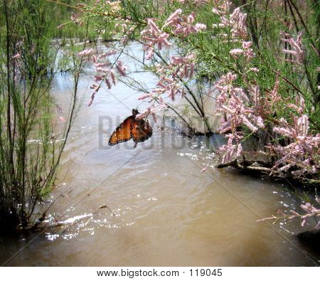 butterfly on tamarisk flower over water stock photo