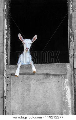 Young White Goat Standing On The Barn Door-Lg Fridge Magnet Skin (size 36x65)