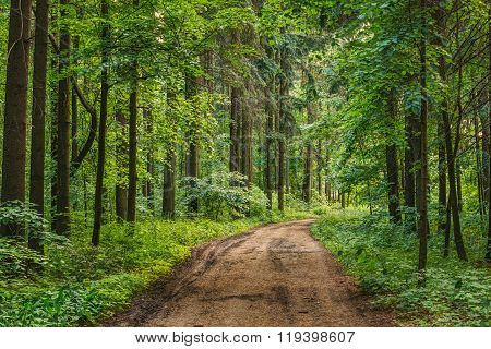 Empty Lane, Path, Way in summer forest