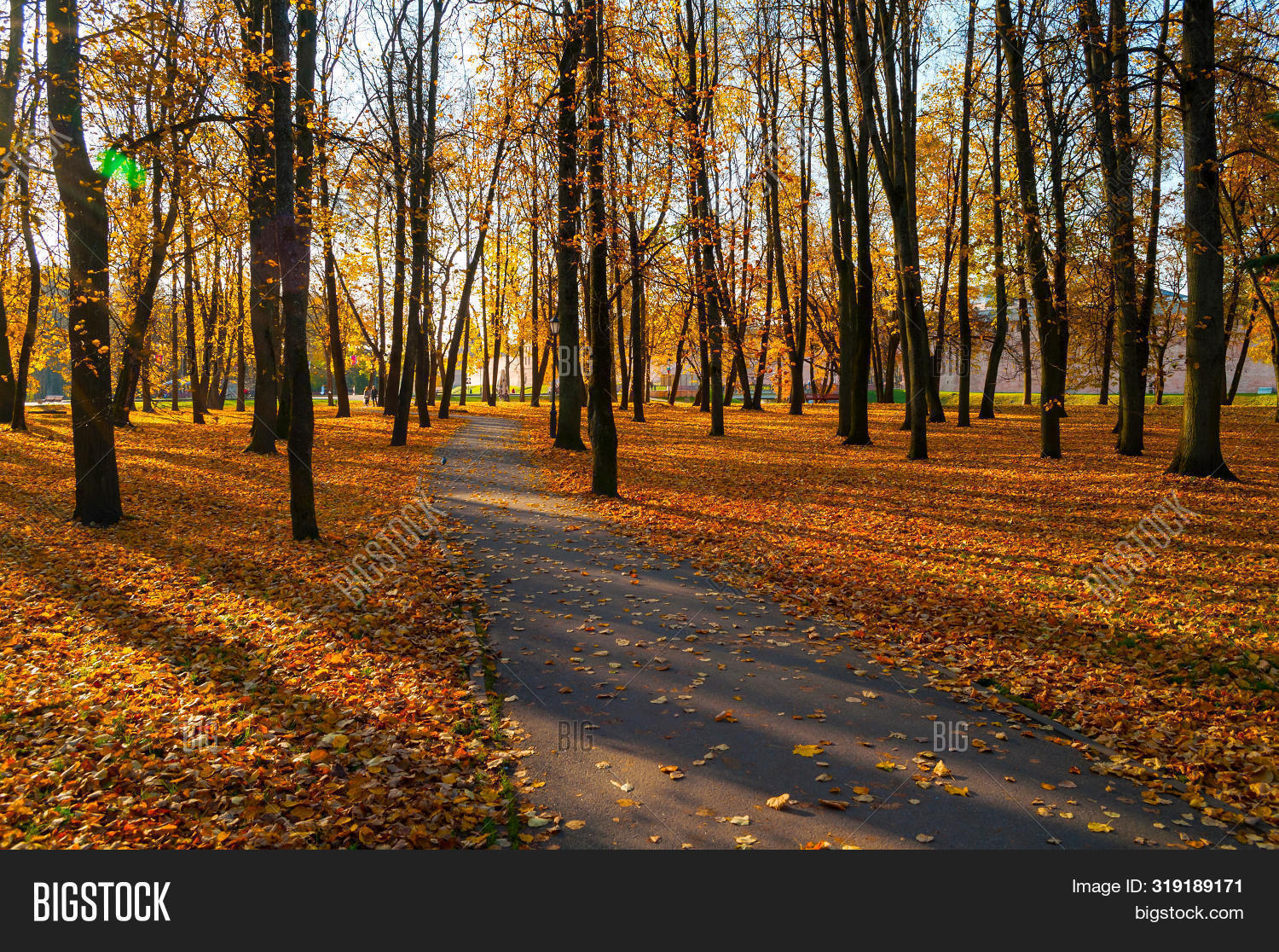 November,fall-October,fall-September,fall-alley,fall-autumn,fall-beautiful,birch,bright,fall-city,cloudy,day,dry,fall,fallen,focus,fall-foliage,footpath,fall-foreground,fall-forest,gold,fall-grove,fall-landscape,fall-leaves,lonely,fall-nature,fall-panorama,fall-park,path,processing,quiet,fall-red,fall-road,fall-row,russian,scene,season,soft,stunning,fall-tree,fall-view,fall-wallpaper,weather,yellow,yellowed