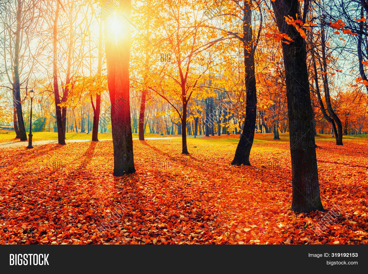 Autumn picturesque park landscape. Autumn trees with yellowed foliage in October morning autumn park. Colorful autumn landscape in bright tones, autumn park scenery