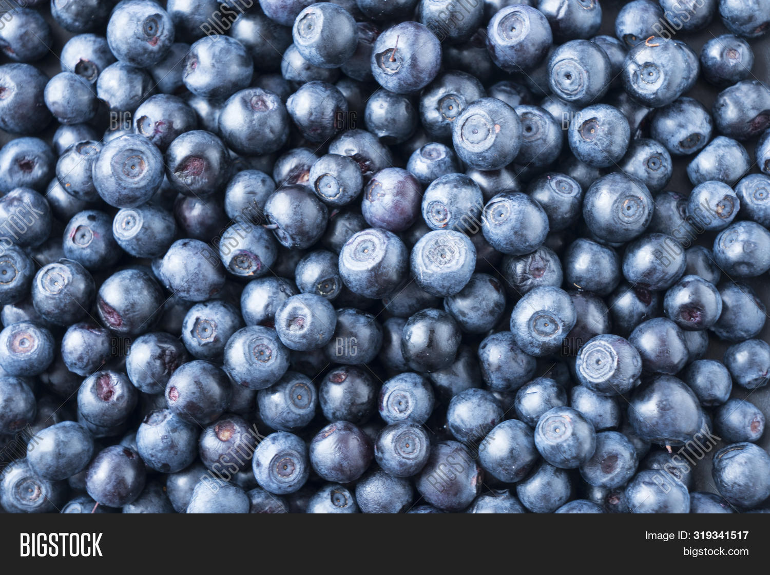 Fresh Ripe Blueberries With Drops Of Dew. Macro Photo. Fresh Blueberry Background. Texture Blueberry