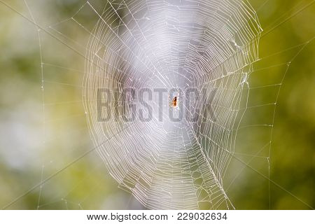 Photo of spider on spider web on blurry, green background stock photo